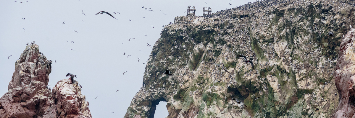 Ica + Ballestas Islands + Paracas from Lima 2 days and 1 night in Lima