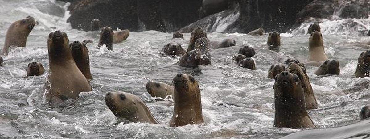 Palomino Islands - Swimming with sea lions from Lima en Lima