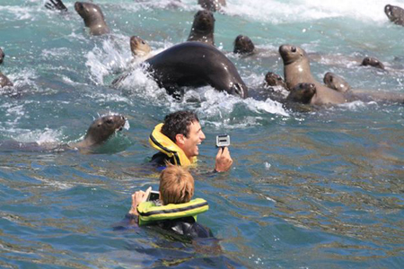 Palomino Islands - Swimming with sea lions from Lima